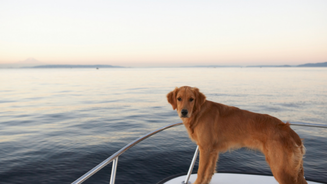 animals on board of the charter boat